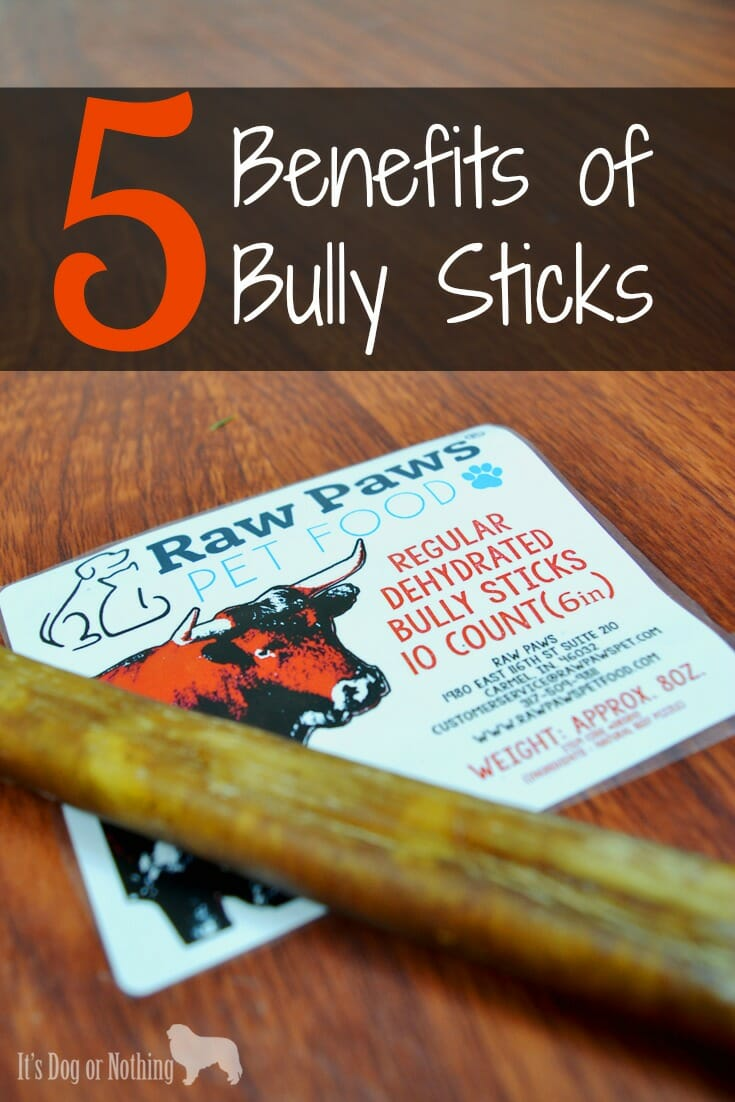 5 benefits of bully sticks raw paws giveaway it 39 s dog or nothing. Black Bedroom Furniture Sets. Home Design Ideas
