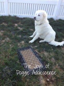 doggieadolescence