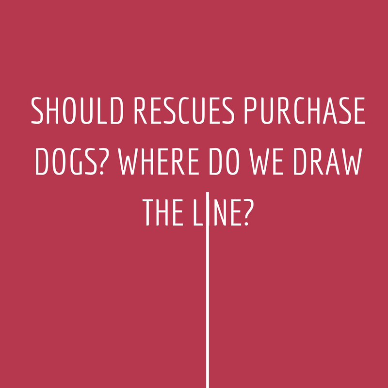 Should Rescues Purchase Dogs?