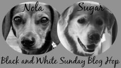 black-white-sunday-badge