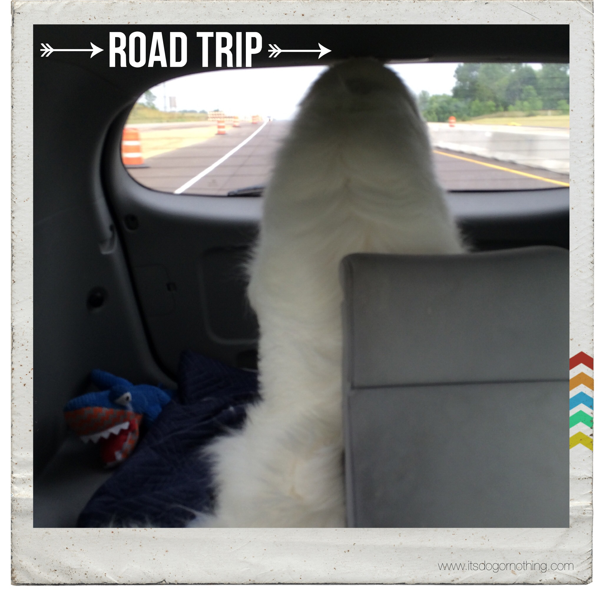 Great Pyrenees Road Trip