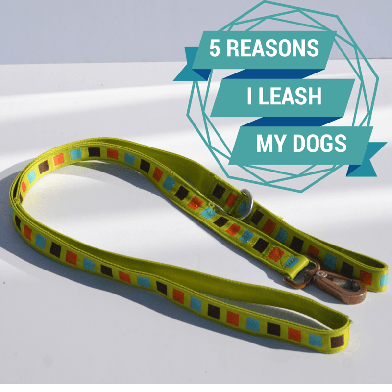 5 Reasons I Leash My Dogs - It's Dog or Nothing