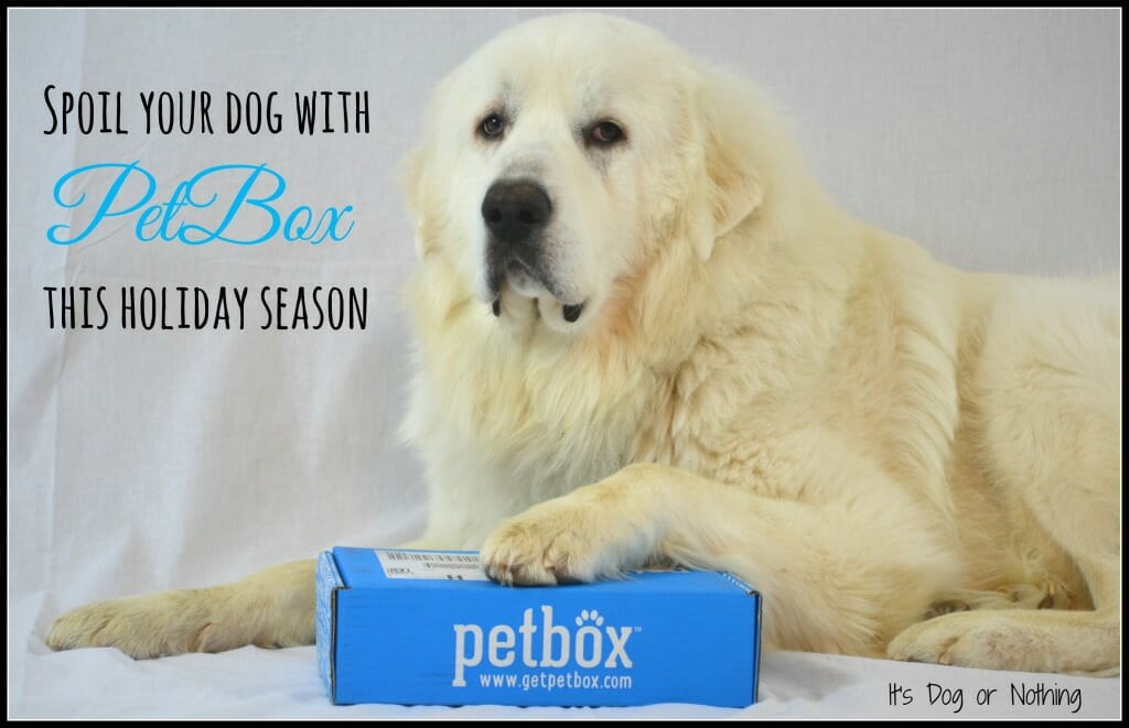Great Pyrenees PetBox