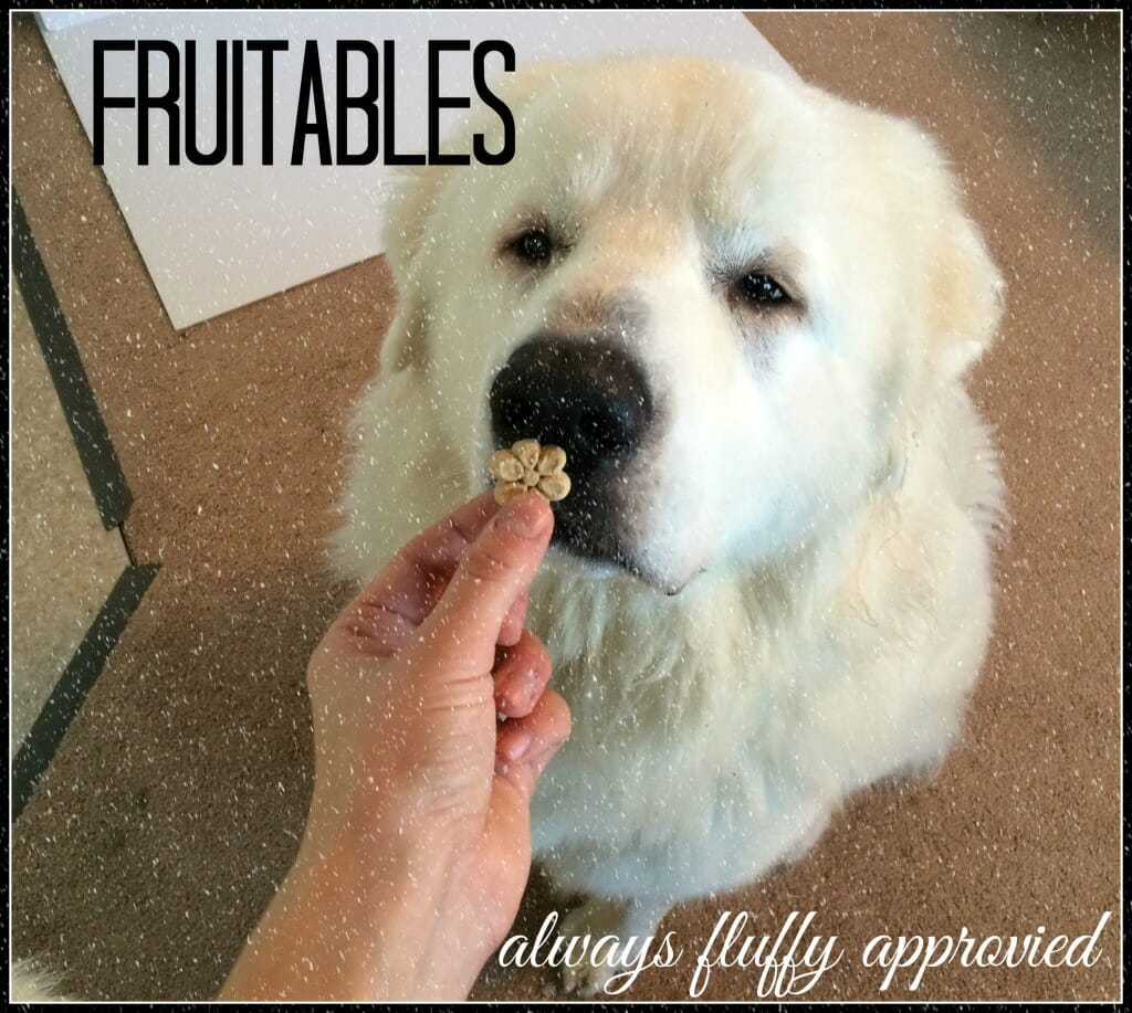 Great Pyrenees - Fruitables