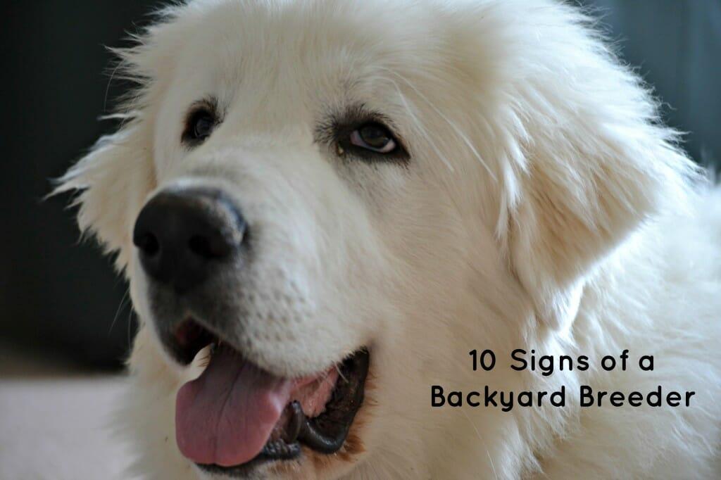 10 Signs of a Backyard Breeder