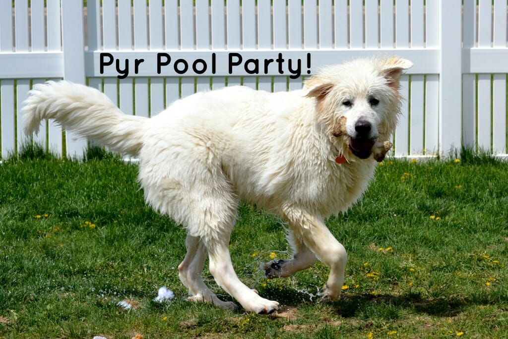 Pyr Pool Party