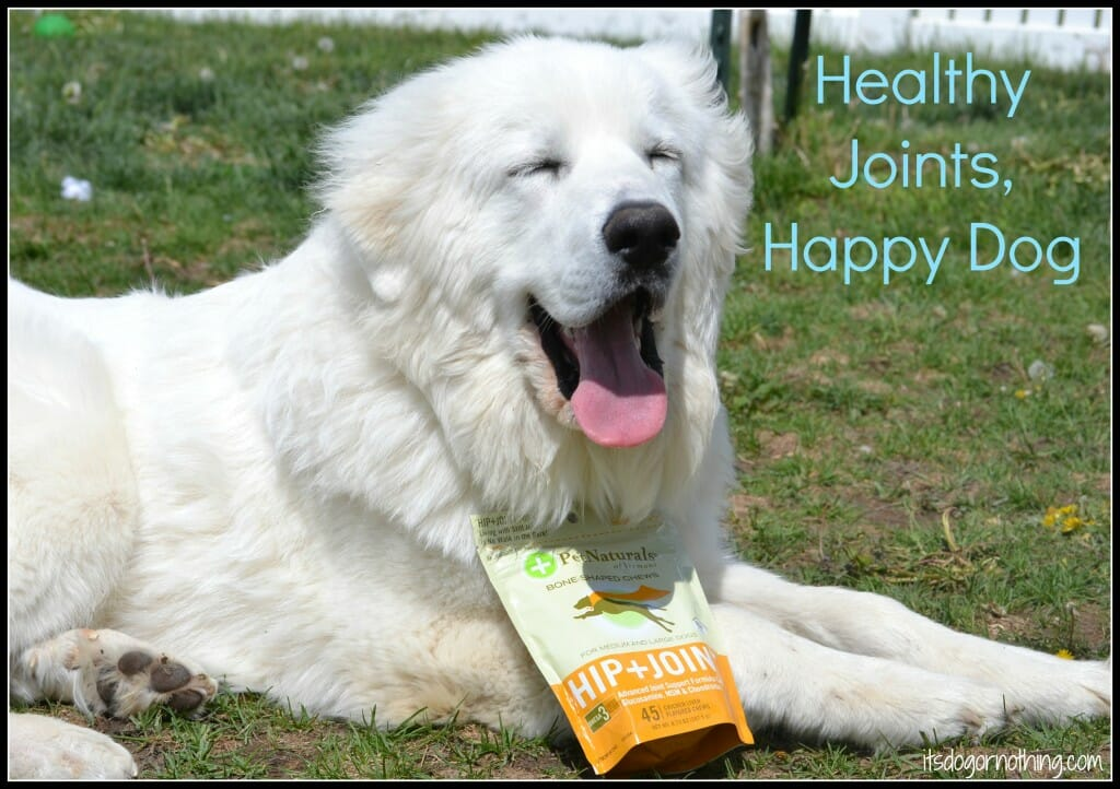 Healthy Joints, Happy Dog