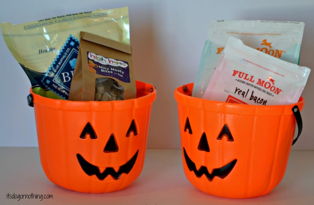Trick or Treat for Your Pooch