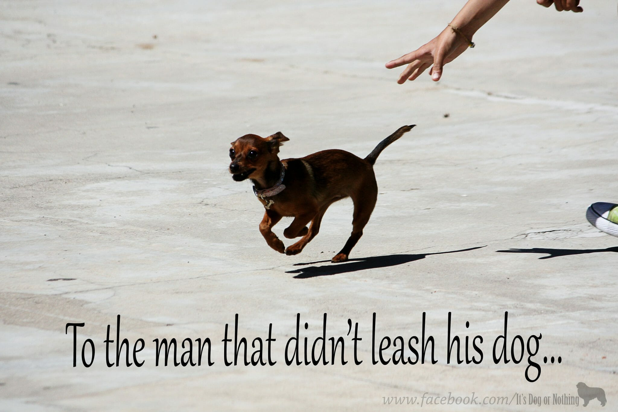 To the Man That Didn't Leash His Dog