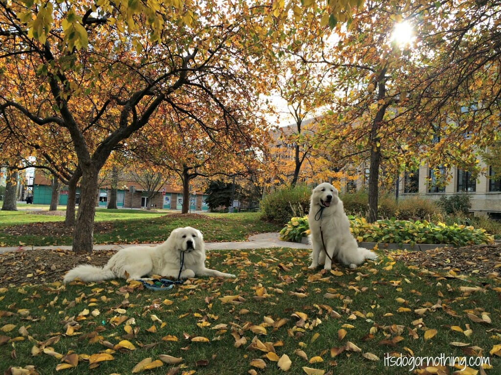 Fall Fantasy Dog Show