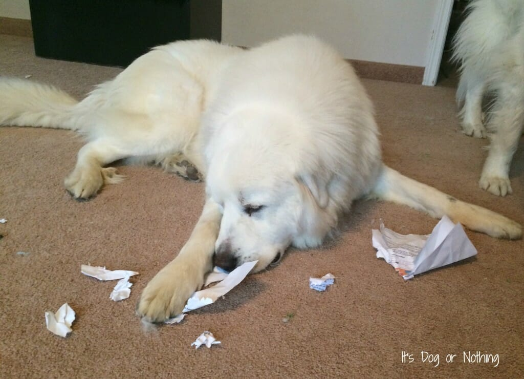 A Dog and His Paper
