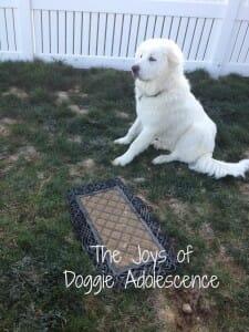 Doggie Adolescence – Atka Gone Bad