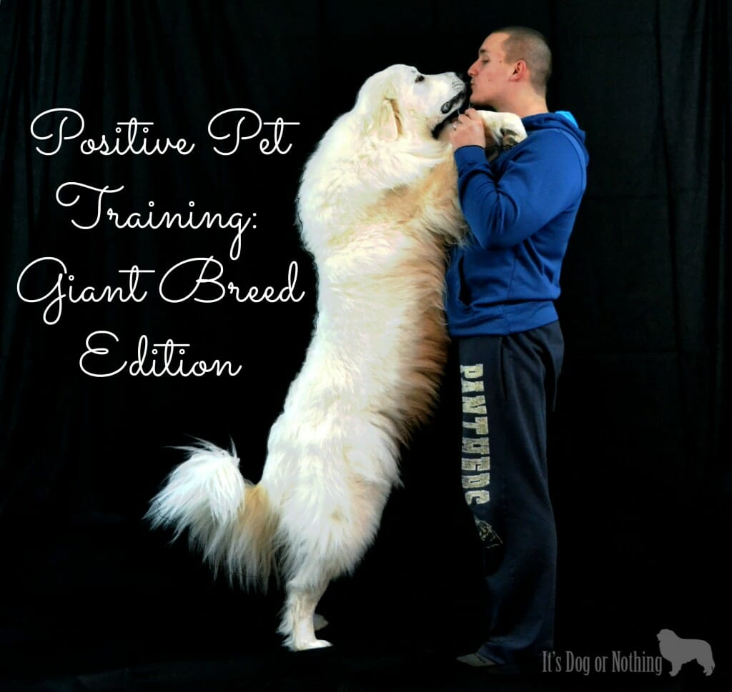 Positive Pet Training: Giant Breed Edition