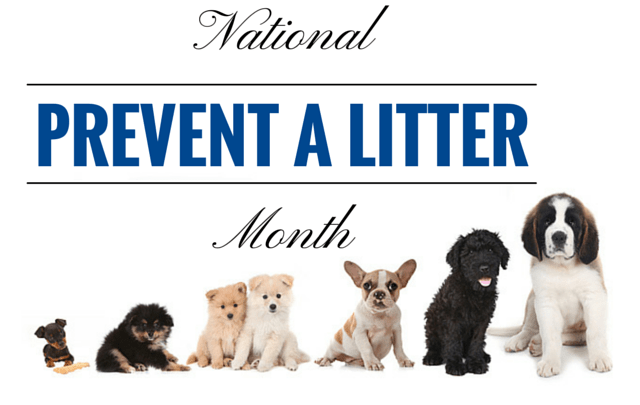 Prevent a Litter Month