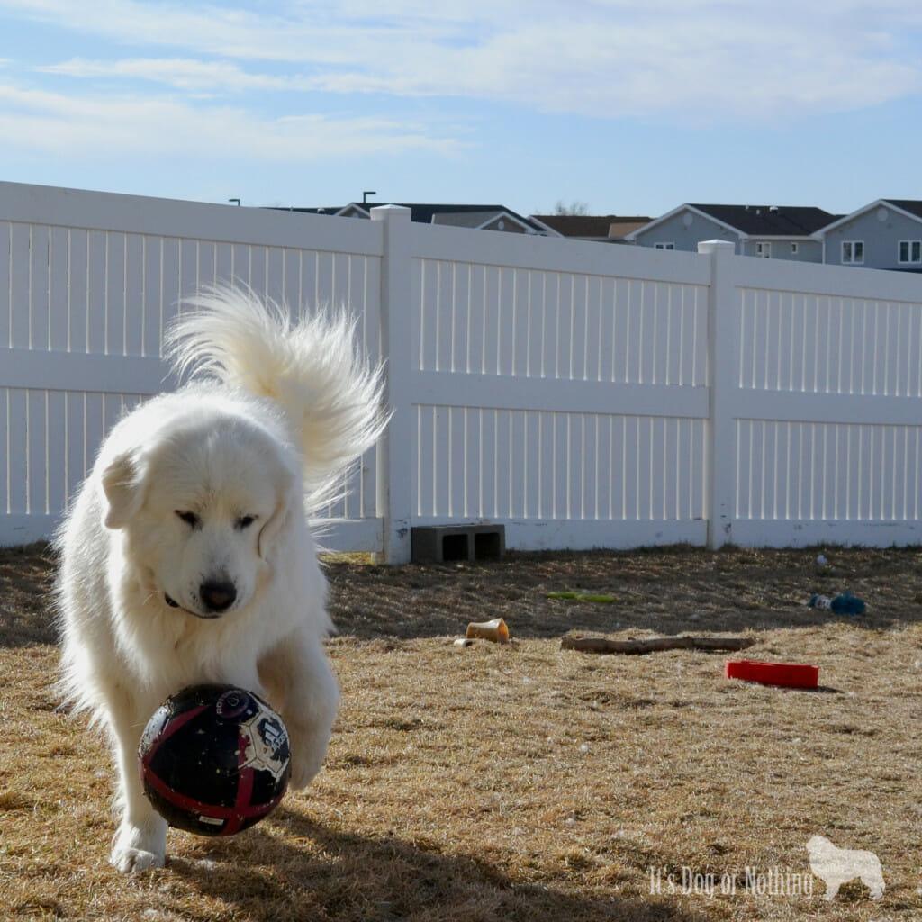 Fluffy Soccer