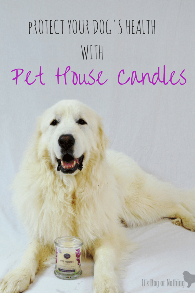 Did you know that regular candles can not only be damaging to your health, but your dog's as well? Pet House Candles have a great, pet-friendly alternative to traditional paraffin candles.