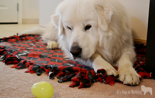 Atka kept knocking the egg away. Yes, I had to move it back to him ;)
