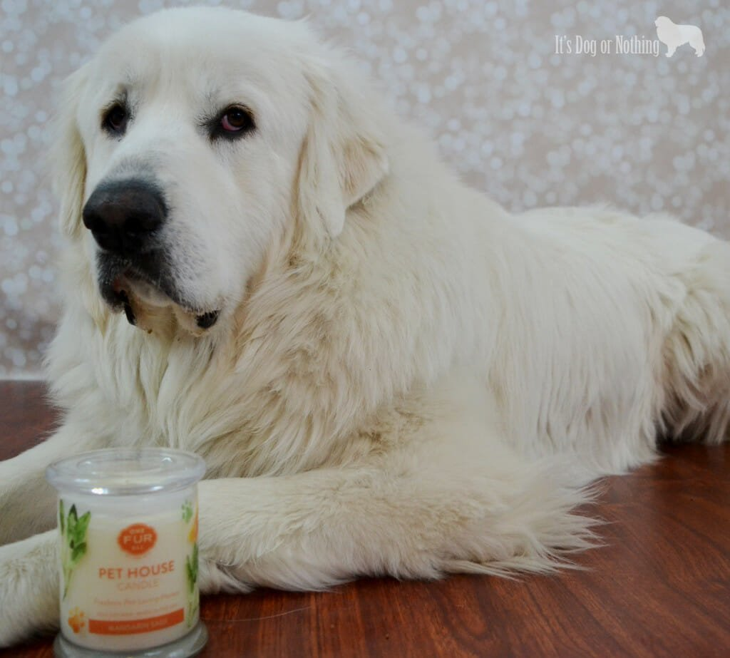 One Fur All Pet House Candles with Great Pyrenees