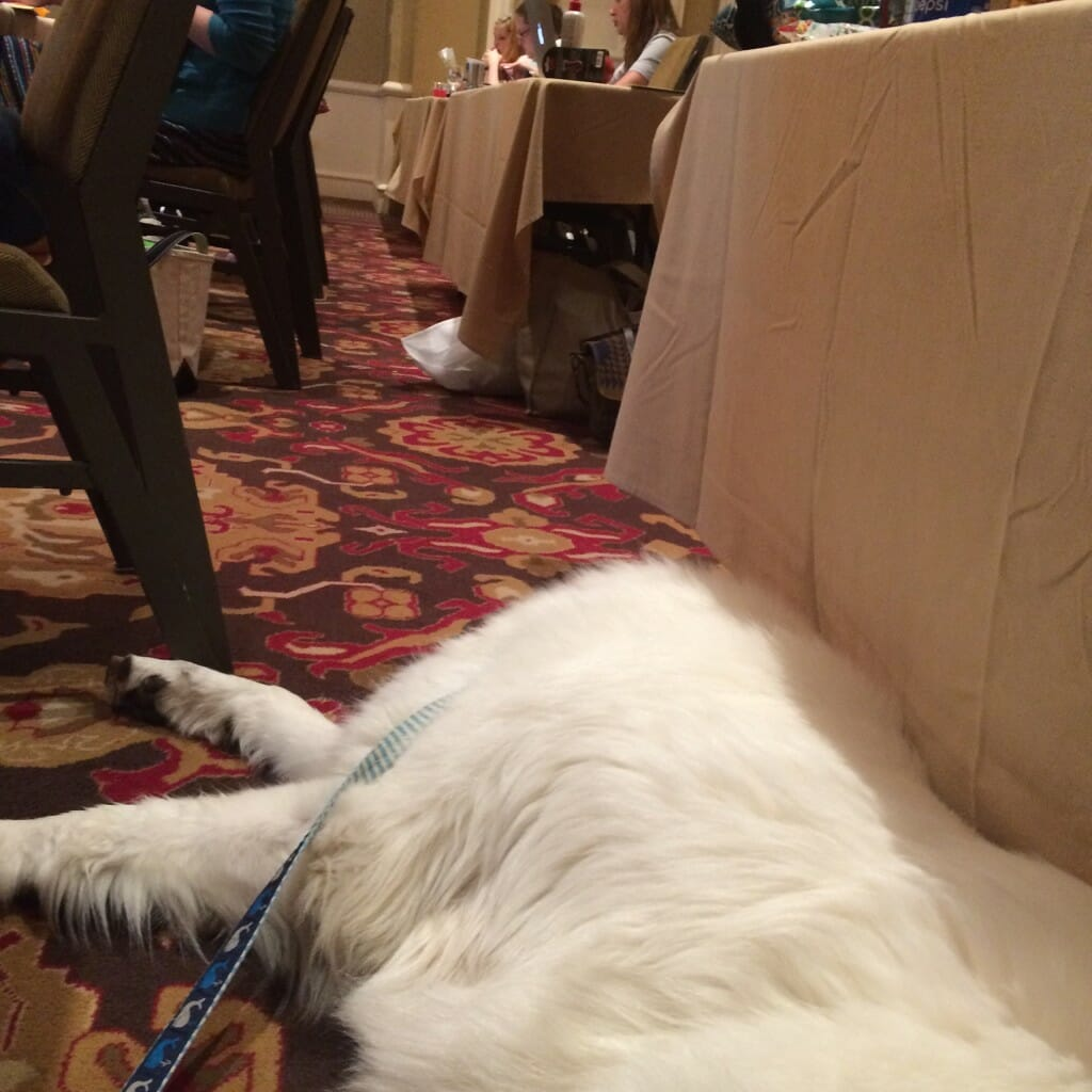 Atka snoozing away during a session. He sure learned a lot... ;)