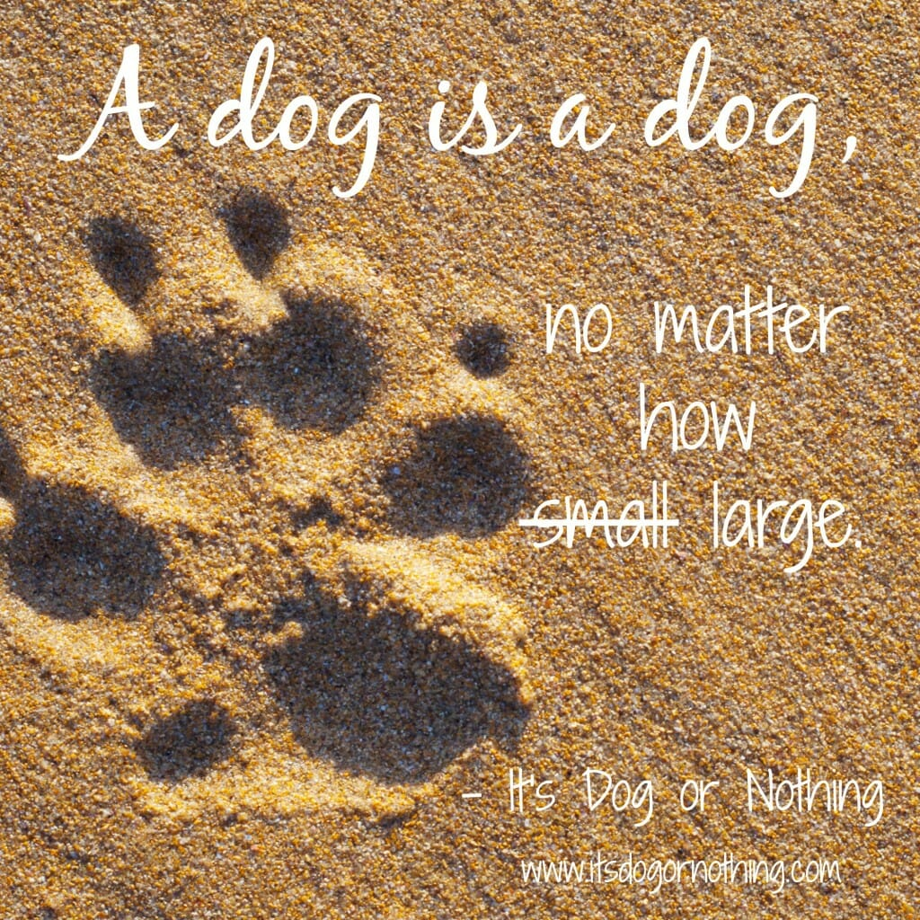 A dog is a dog, no matter how large.