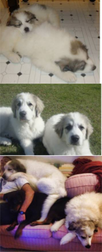 Shauna Turnbull's pyrs at approximately 8 weeks, 6 months, and 4 years. They started dark, lightened, and then darkened again.