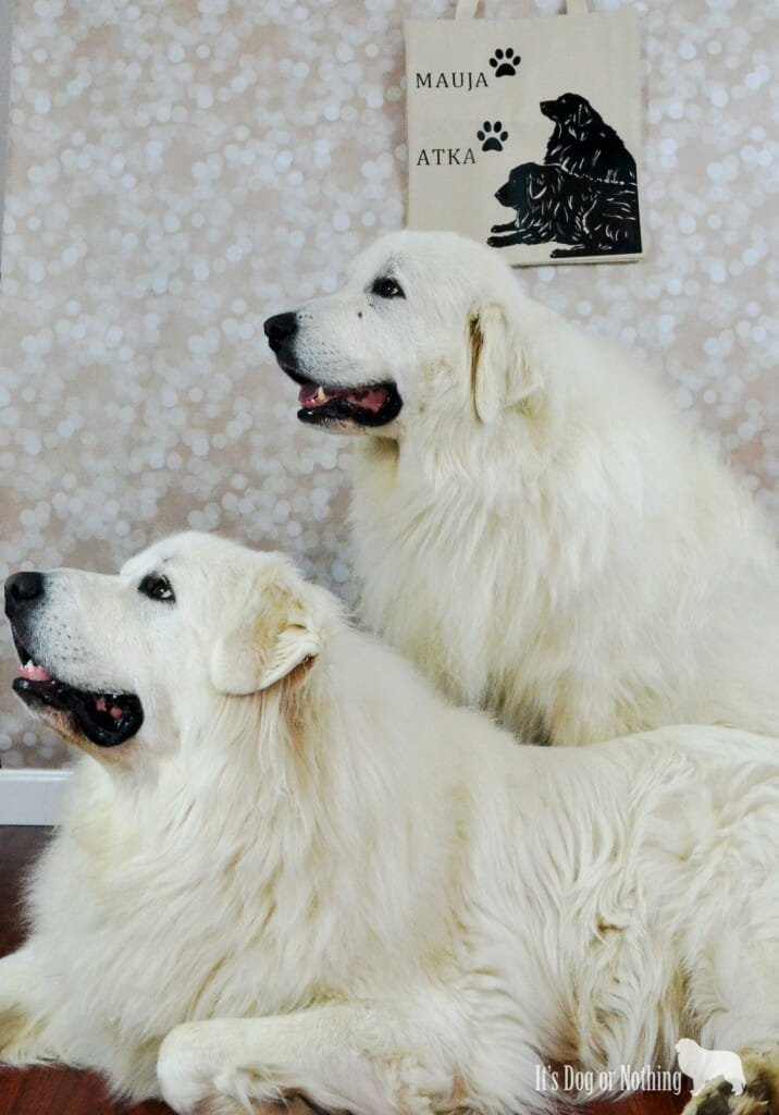 Great Pyrenees with Tote Tails Tote