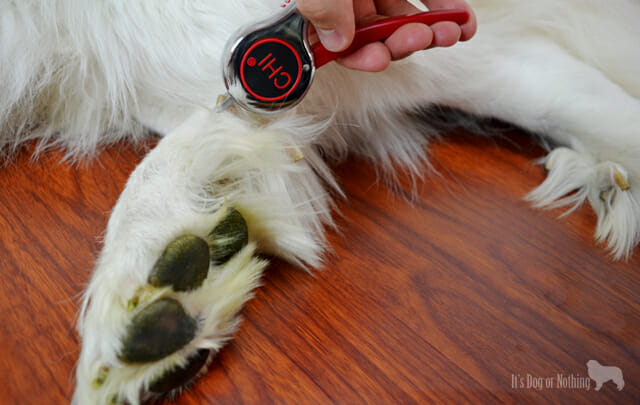Here's how we've updated our Great Pyrenees dog grooming routine with #CHIforDogs sold exclusively at PetSmart!. We use the #CHIforDogs dog grooming nail clipper to trim those double dew claws.