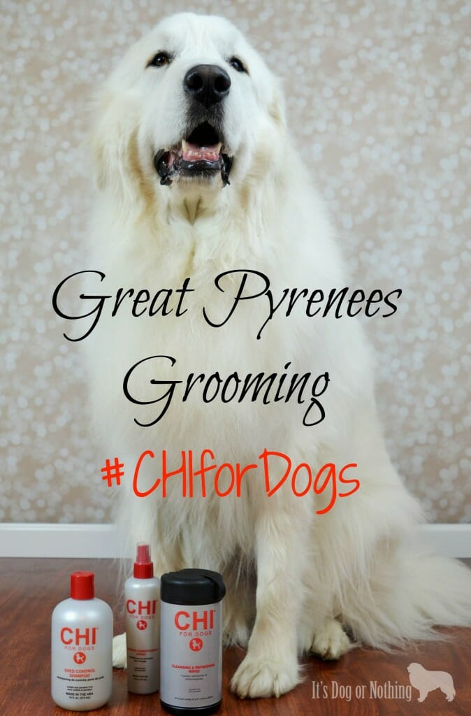 We've updated our Great Pyrenees dog grooming routine to use the #CHIforDogs products sold exclusively at PetSmart!