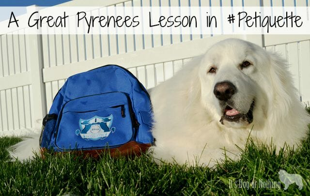 Is your dog-loving home guest ready? We're attending the Febreze school of #Petiquette to eliminate any pet odor.