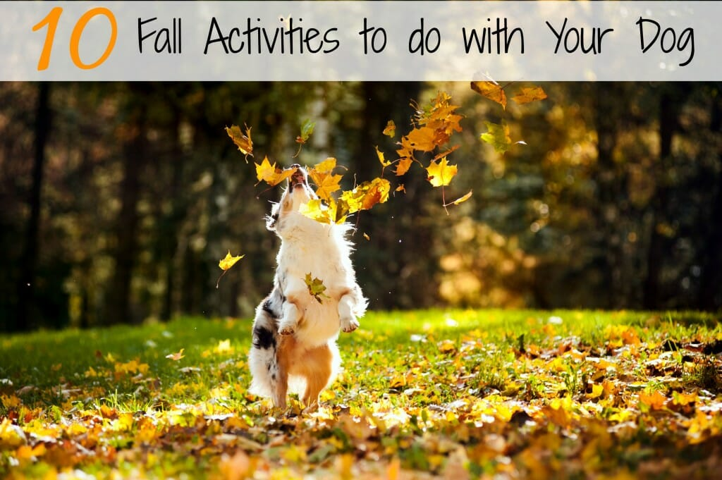 Need a few fun activities to do with your dog this fall? We have 10 great ideas for you!