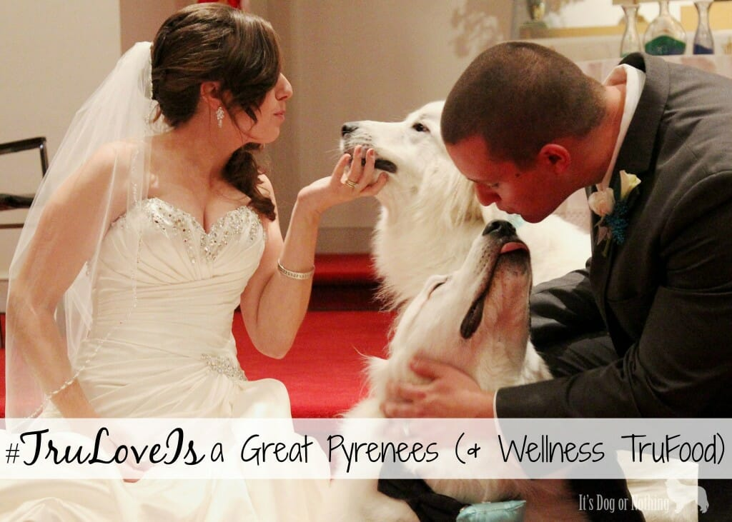 #TruLoveIs a Great Pyrenees (& Wellness TruFood)