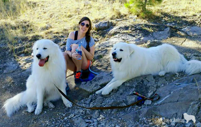 5 Hiking Safety Tips + a Fluffy Adventure