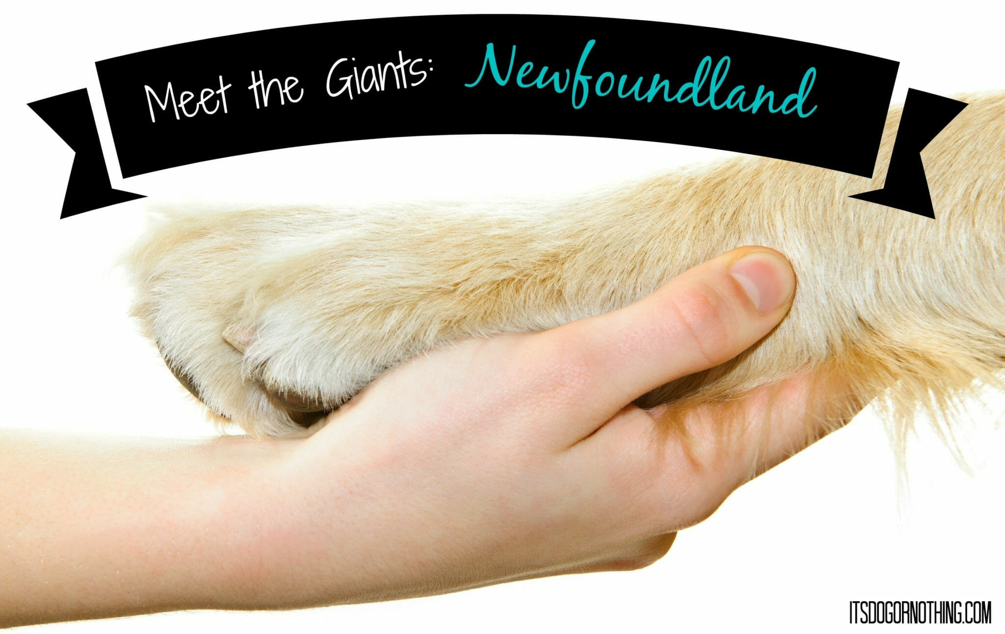 Meet the Giants: Newfoundland