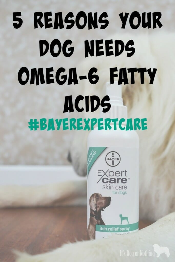 5 Reasons Your Dog Needs Omega-6 Fatty Acids #BayerExpertCare