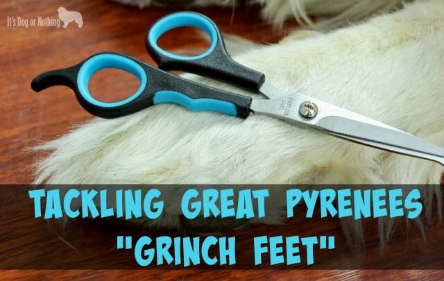 Tackling Grinch Feet + Grooming Giveaway!
