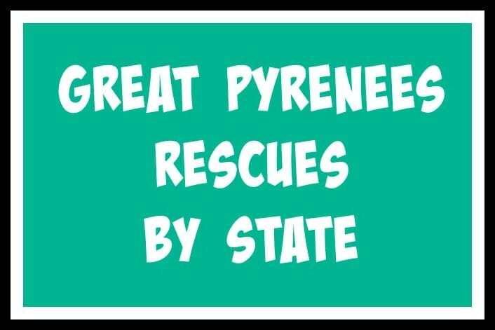 A complete list of Great Pyrenees Rescues in the United States.