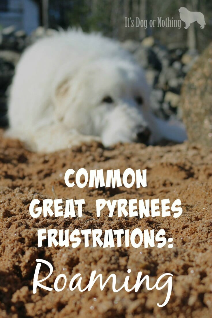 How To Prevent Great Pyrenees Roaming