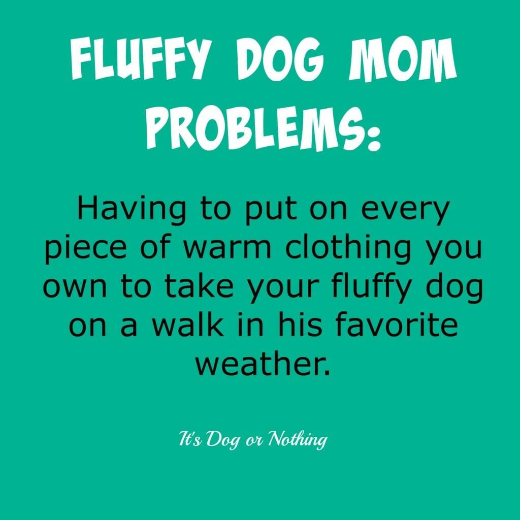 Fluffy Dog Mom Problems