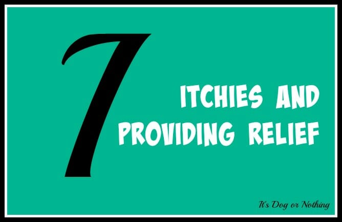 When it comes to giant breed health and nutrition, there's a lot that goes into raising a happy, healthy dog. We're going from A to Z talking about giant breed specific needs! Today, it's all about the itchies and providing relief.