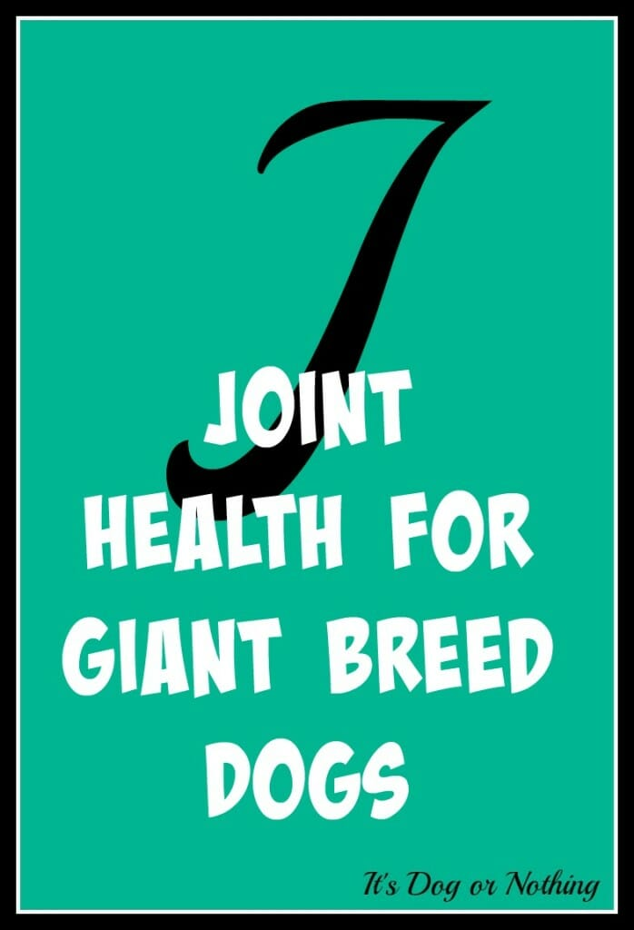 When it comes to giant breed health and nutrition, there's a lot that goes into raising a happy, healthy dog. We're going from A to Z talking about giant breed specific needs! Today, it's all about improving joint health for giant breed dogs with krill oil!