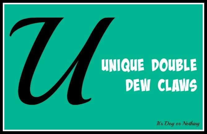 Unique Double Dew Claws