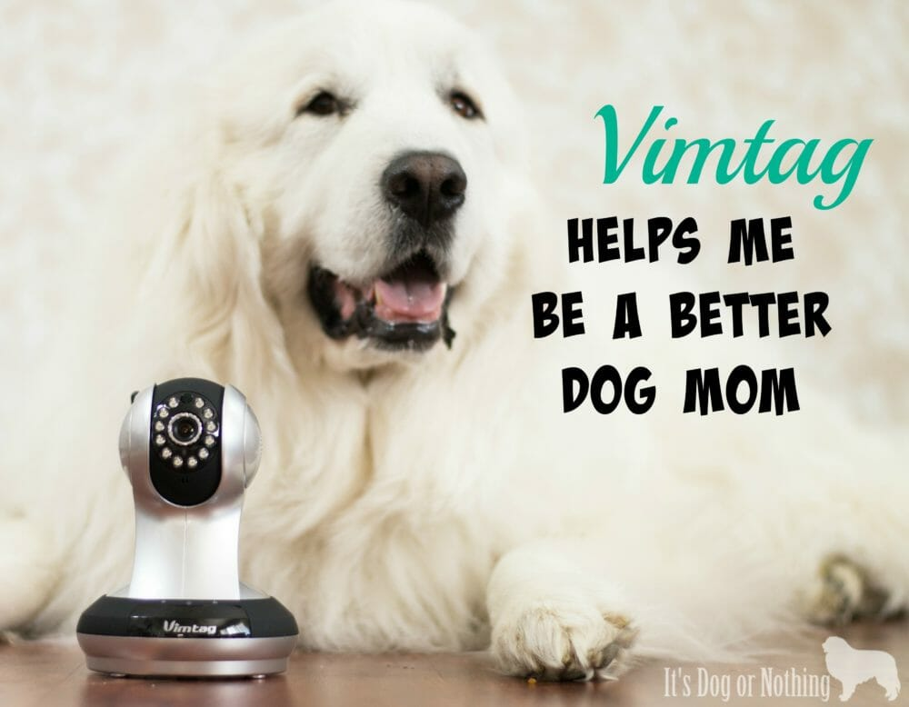 Vimtag Helps Me Be a Better Dog Mom