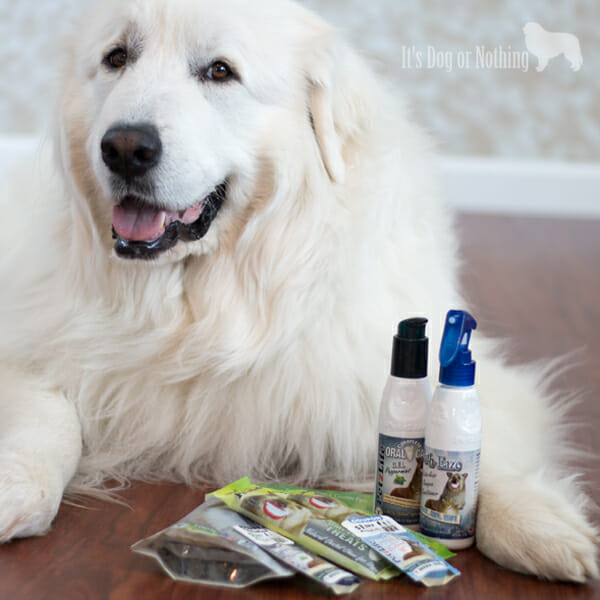 Pet Paw-Looza | PetzLife with Great Pyrenees