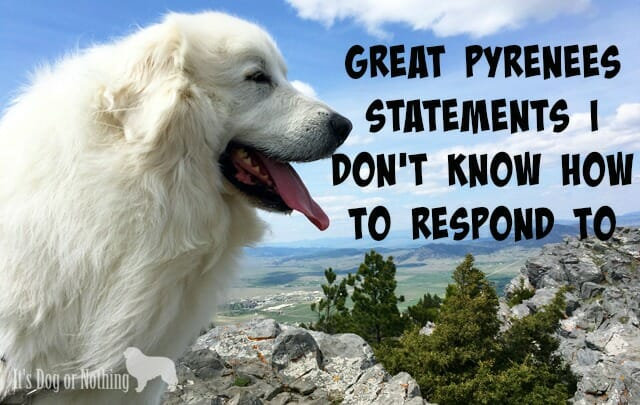 Great Pyrenees Statements I Don't Know How To Respond To