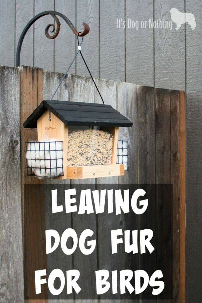 When you have dogs, you're bound to have a lot of fur! Here's how I put my Great Pyrenees' fur to good use by leaving fur for birds.