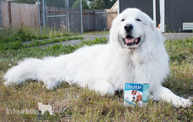 For far too long, Mauja struggled with frequent UTIs. CheckUp helps me to ensure my Great Pyrenees is healthy and saves us the stress of a vet visit!