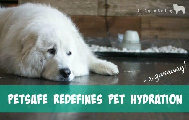 PetSafe Redefines Pet Hydration + DIY Water Bowl Upgrade