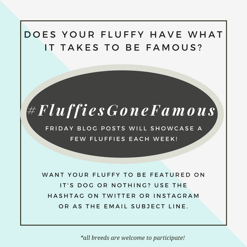#FluffiesGoneFamous