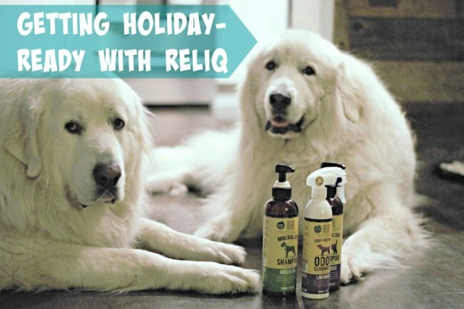 It's Dog or Nothing | Getting Holiday-Ready with RELIQ