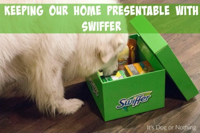 If you have a double-coated dog, how do you handle the fur? If we don't do daily brushing sessions, my home pays the price! Thankfully, Swiffer makes it quick and easy to keep our home fur-free.